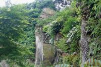 崖のウツギ2